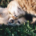 The Top Foods You Should Keep miles away from your cat or dog