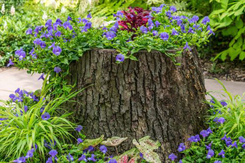 5 Tips for Planting Around Tree Tips